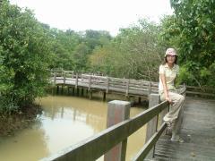 川満のマングローブ