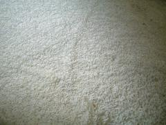 この白い米が一日経つと黒くなる