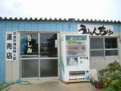 荷川取漁港のうみんちゅ