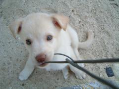 荷川取牧場にいる子犬
