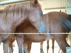 集まる馬たち