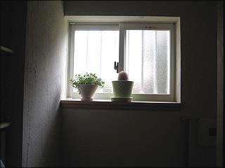 1014トイレ1階窓