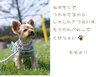 矢ケ崎公園ブログ