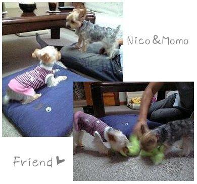 Nico&モモaブログ