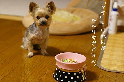 IMGP8306ブログ
