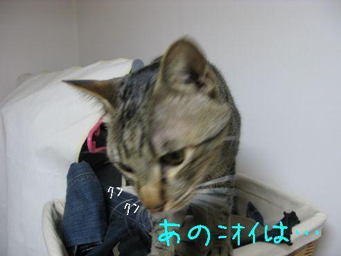 IMG_67325
