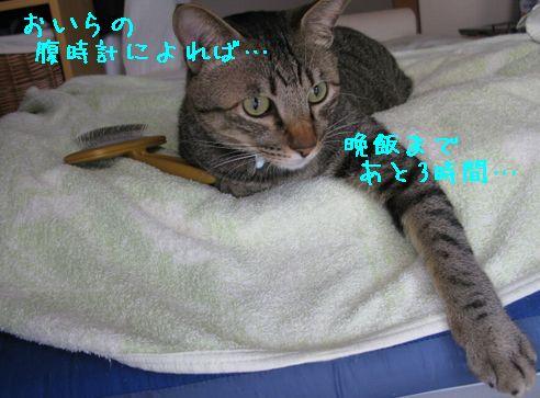 IMG_58655.jpg