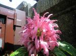 町で見かけた花シリーズhana09243