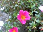町で見かけた花シリーズhana09256