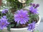 町で見かけた花シリーズhana09283