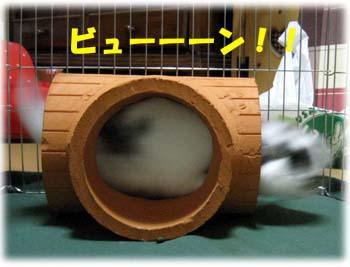2008.10.20 kinoko 056a