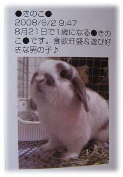 2008.10.23 kinoko 046a