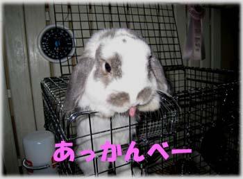 2008.10.23 kinoko 002 コピーa