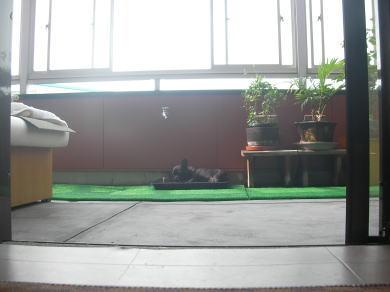 20080803.jpg