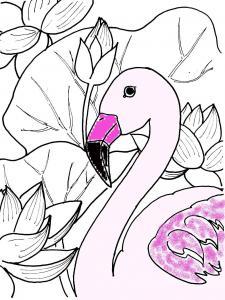 蓮とフラミンゴ