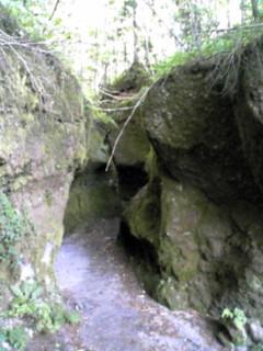 苔の洞門2009.1