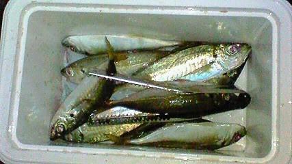 20090806柳井釣行2