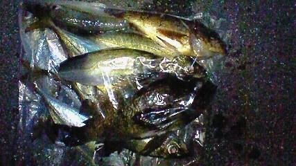 20090806柳井b釣行4
