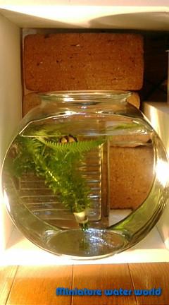 ドラム金魚鉢②