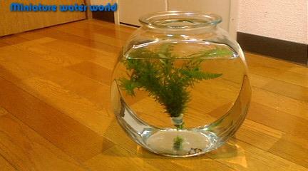 ドラム金魚鉢