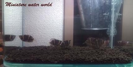 チョコグラ水槽の底にソイル