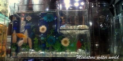 押し花と貝殻の水槽