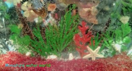 白い押し花と貝殻の水槽