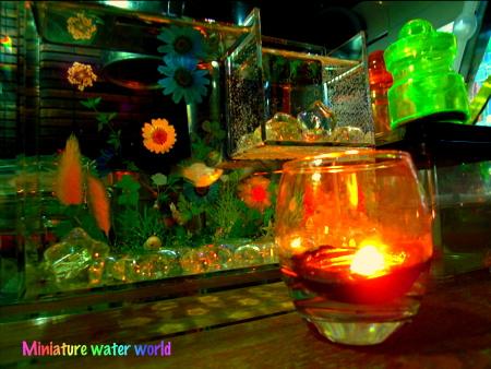 きょうのファンタジー水槽