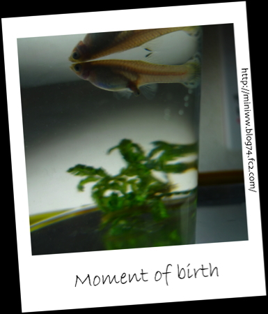 Moment of birth