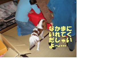 20080301102310.jpg