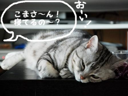 koma_20090619170320.jpg