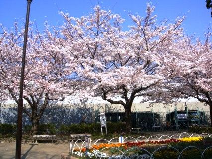 Jinsei Park