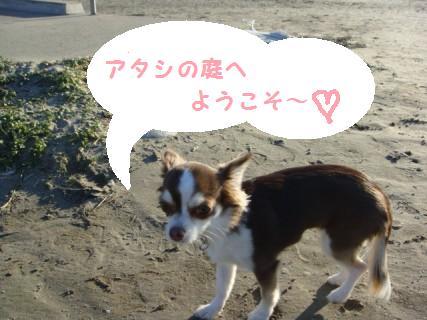 Suri-chan