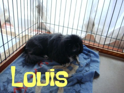 Louis chan