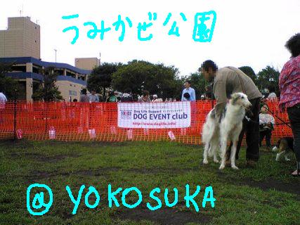 DOG TIME RACE @ Yokosuka Umikaze Park