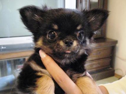 puppy Lindsay