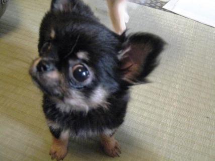puppy Lindsay01