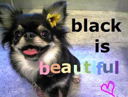 Black is...