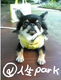 @ jinsei park
