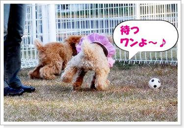 クッキー君&ココ☆2