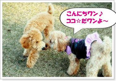 クッキー君&ココ☆1