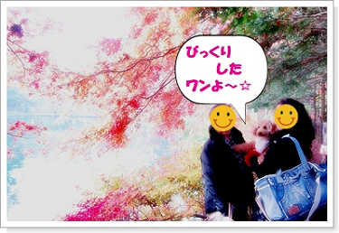 071102kumoba-10a.jpg