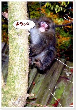 071102kumoba-6a.jpg