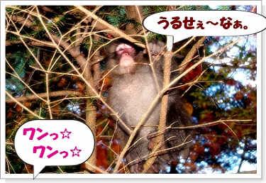 071102kumoba-7a.jpg