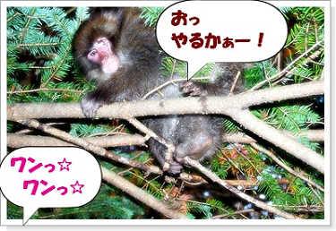 071102kumoba-8a.jpg