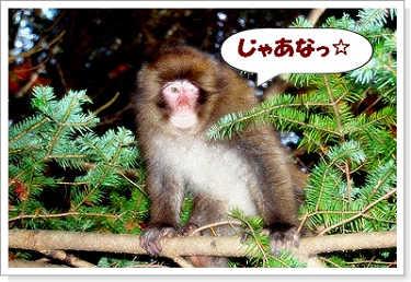 071102kumoba-9a.jpg