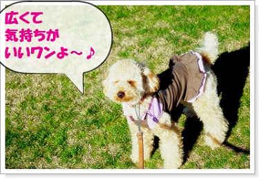 071102nakakaru-10a.jpg