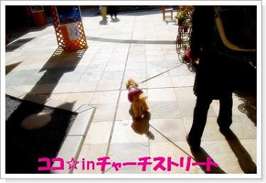 071102nakakaru-1a.jpg