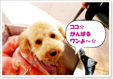 071102nakakaru-5a.jpg