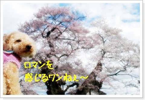 DSC_0204a.jpg
